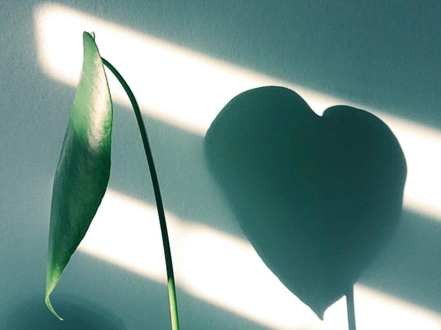 Ilustrační obrázek pokojová rostlina
